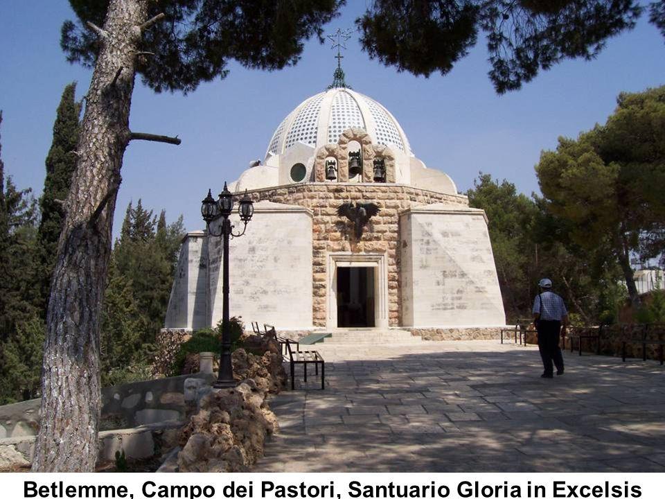 Chiesa S. Maria della Stella - Natività di Gesù - Olivio Sozzi (Olio su tela sec. XVIII)