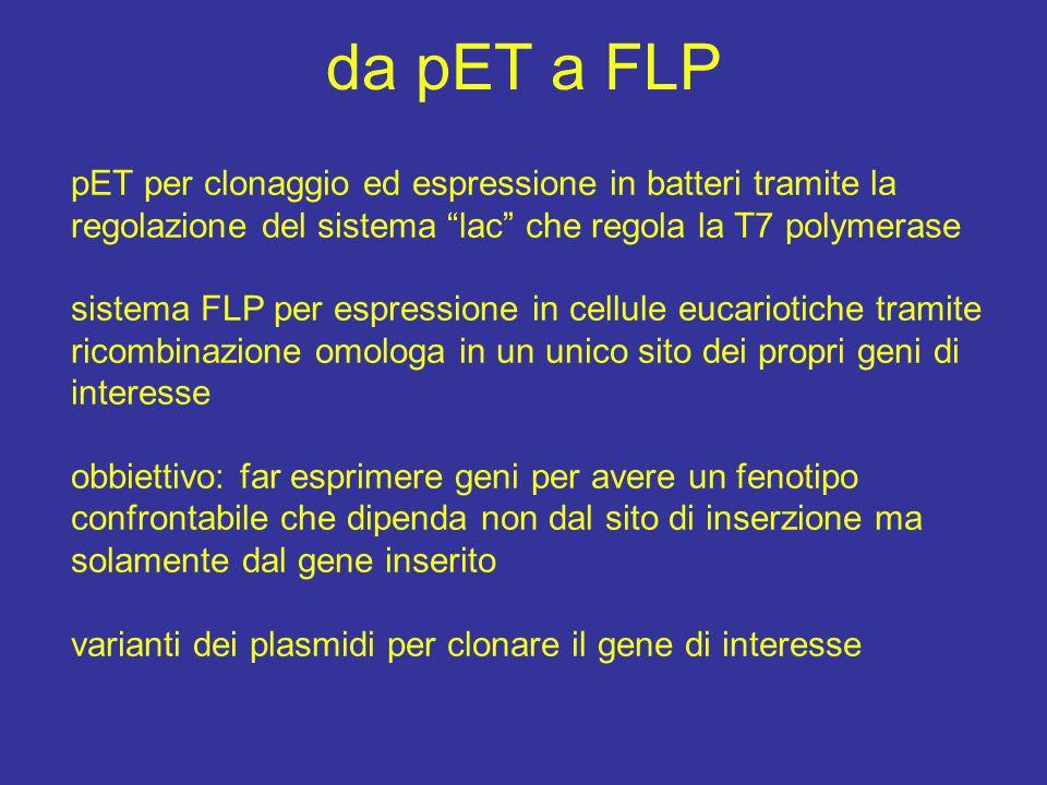 """da pET a FLP pET per clonaggio ed espressione in batteri tramite la regolazione del sistema """"lac"""" che regola la T7 polymerase sistema FLP per espressi"""