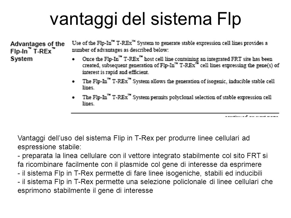 vantaggi del sistema Flp Vantaggi dell'uso del sistema Flip in T-Rex per produrre linee cellulari ad espressione stabile: - preparata la linea cellulare con il vettore integrato stabilmente col sito FRT si fa ricombinare facilmente con il plasmide col gene di interesse da esprimere - il sistema Flp in T-Rex permette di fare linee isogeniche, stabili ed inducibili - il sistema Flp in T-Rex permette una selezione policlonale di linee cellulari che esprimono stabilmente il gene di interesse