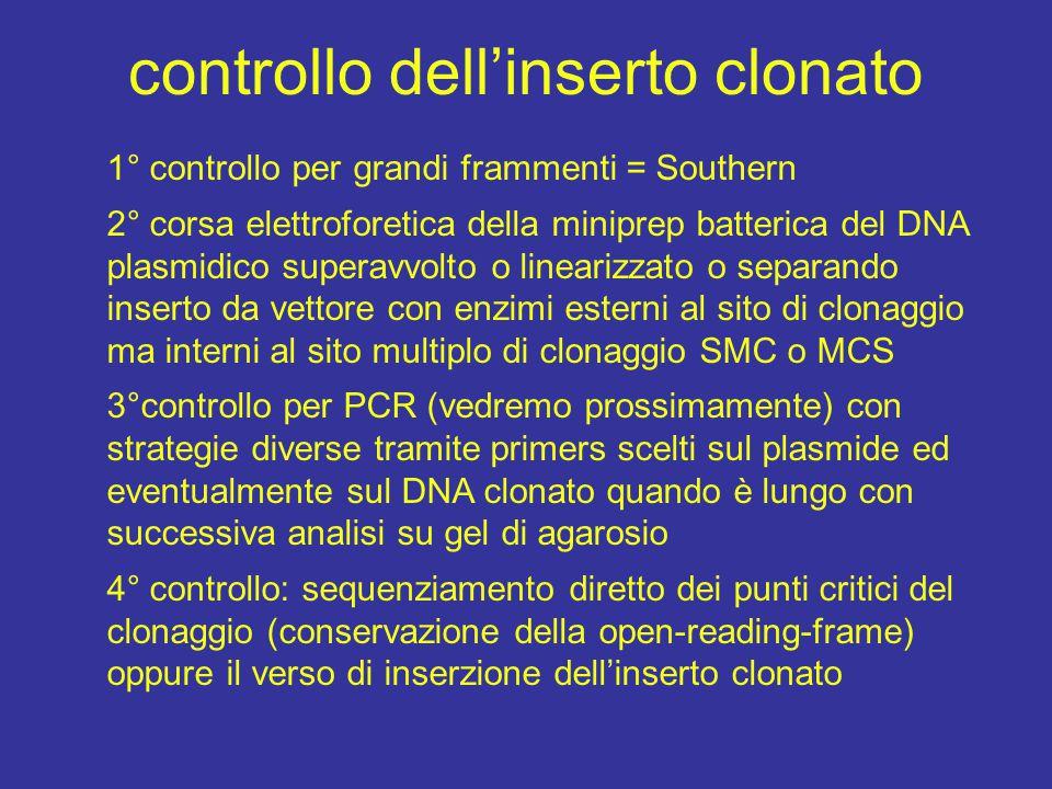 controllo dell'inserto clonato 1° controllo per grandi frammenti = Southern 2° corsa elettroforetica della miniprep batterica del DNA plasmidico super
