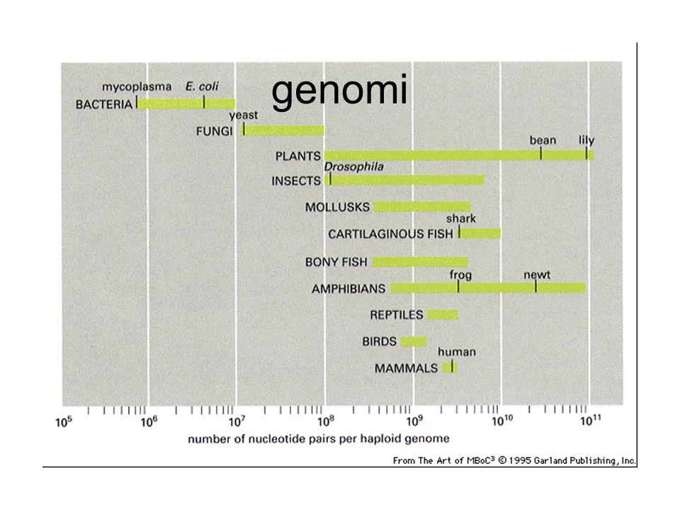 genomi