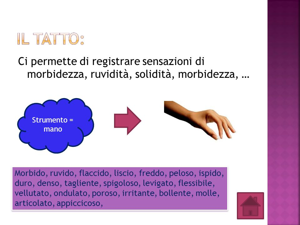 Ci permette di registrare sensazioni di morbidezza, ruvidità, solidità, morbidezza, … Strumento = mano Morbido, ruvido, flaccido, liscio, freddo, pelo