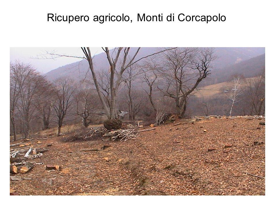 Ricupero agricolo, Monti di Corcapolo
