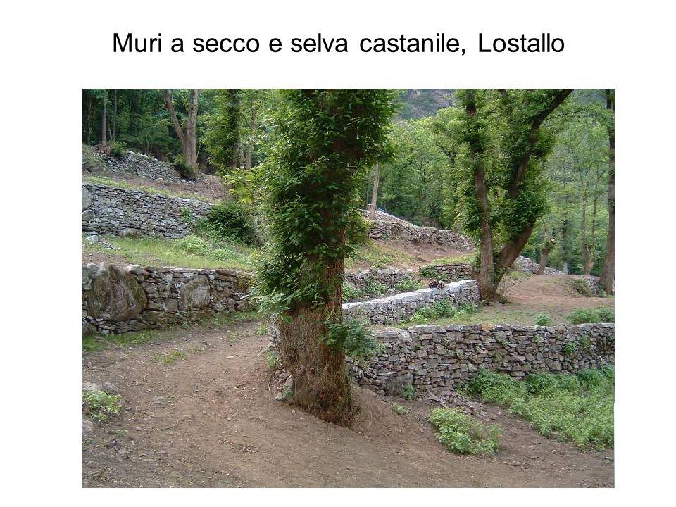 Muri a secco e selva castanile, Lostallo