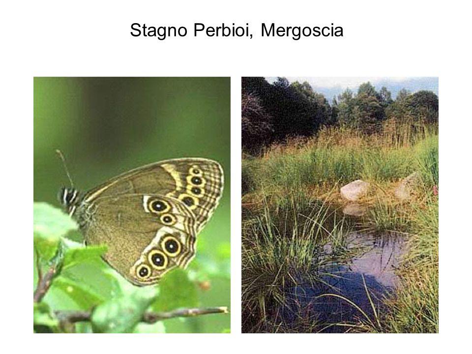 Stagno Perbioi, Mergoscia