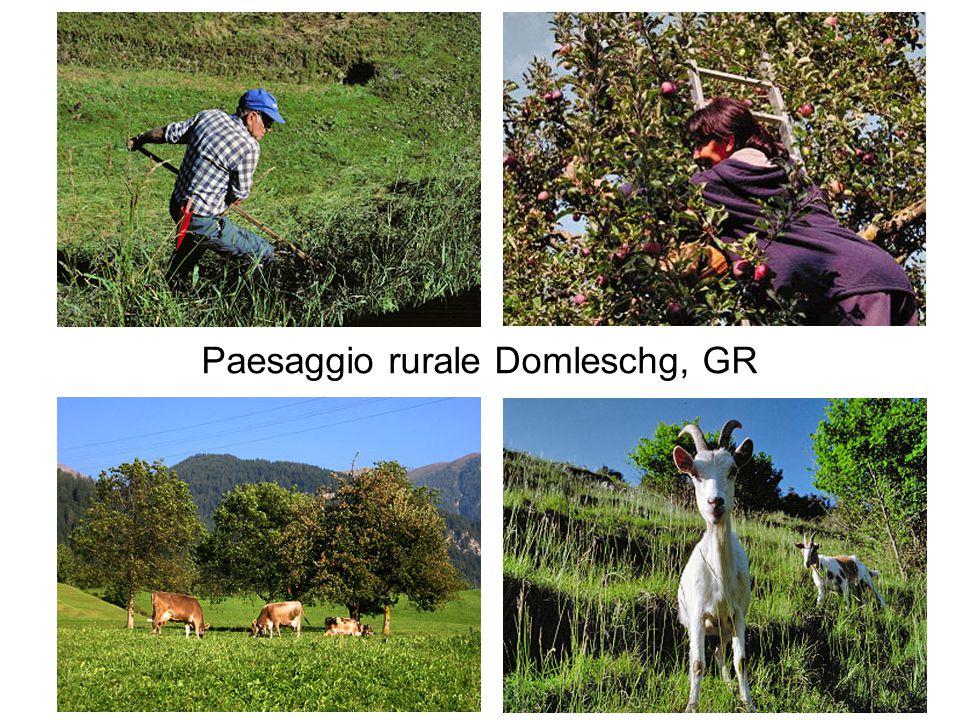 Paesaggio rurale Domleschg, GR