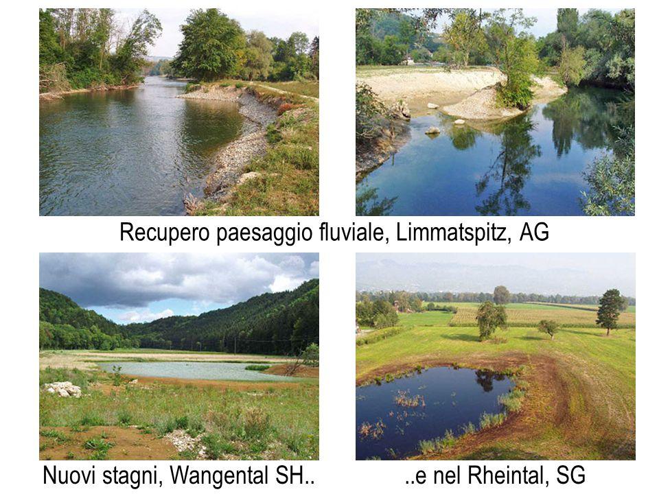 Recupero paesaggio fluviale, Limmatspitz, AG Nuovi stagni, Wangental SH....e nel Rheintal, SG