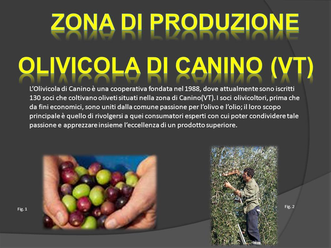 L'Olivicola di Canino è una cooperativa fondata nel 1988, dove attualmente sono iscritti 130 soci che coltivano oliveti situati nella zona di Canino(VT).