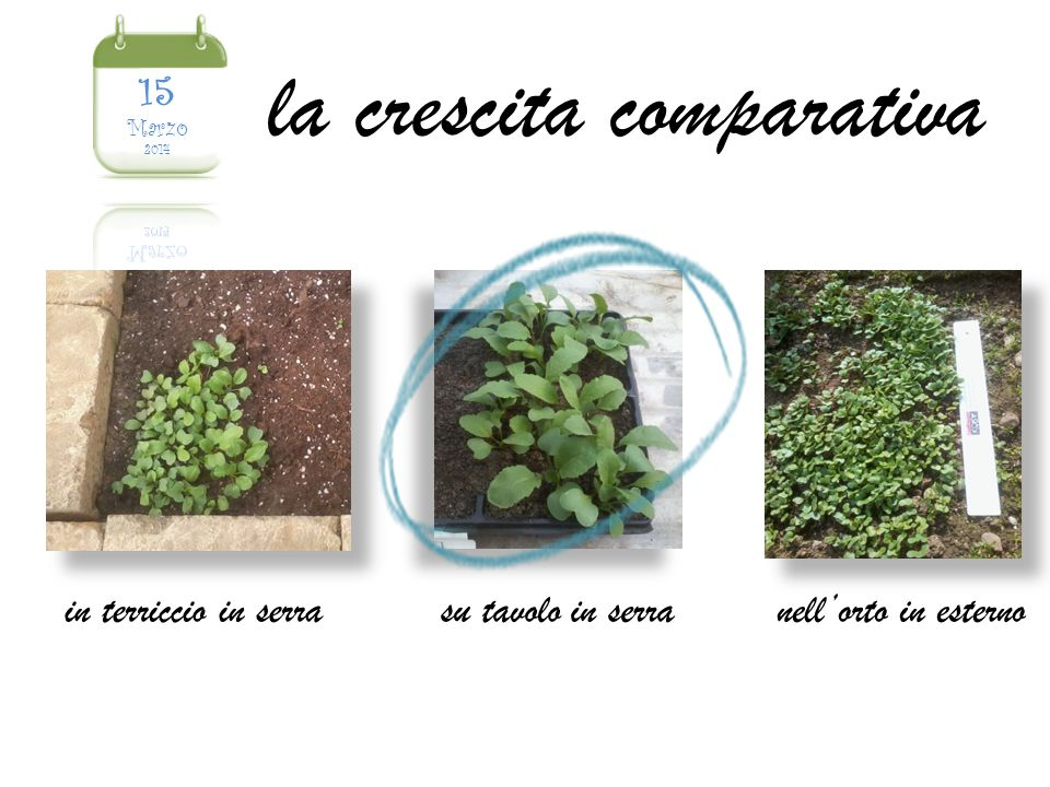 la crescita comparativa in terriccio in serrasu tavolo in serranell'orto in esterno