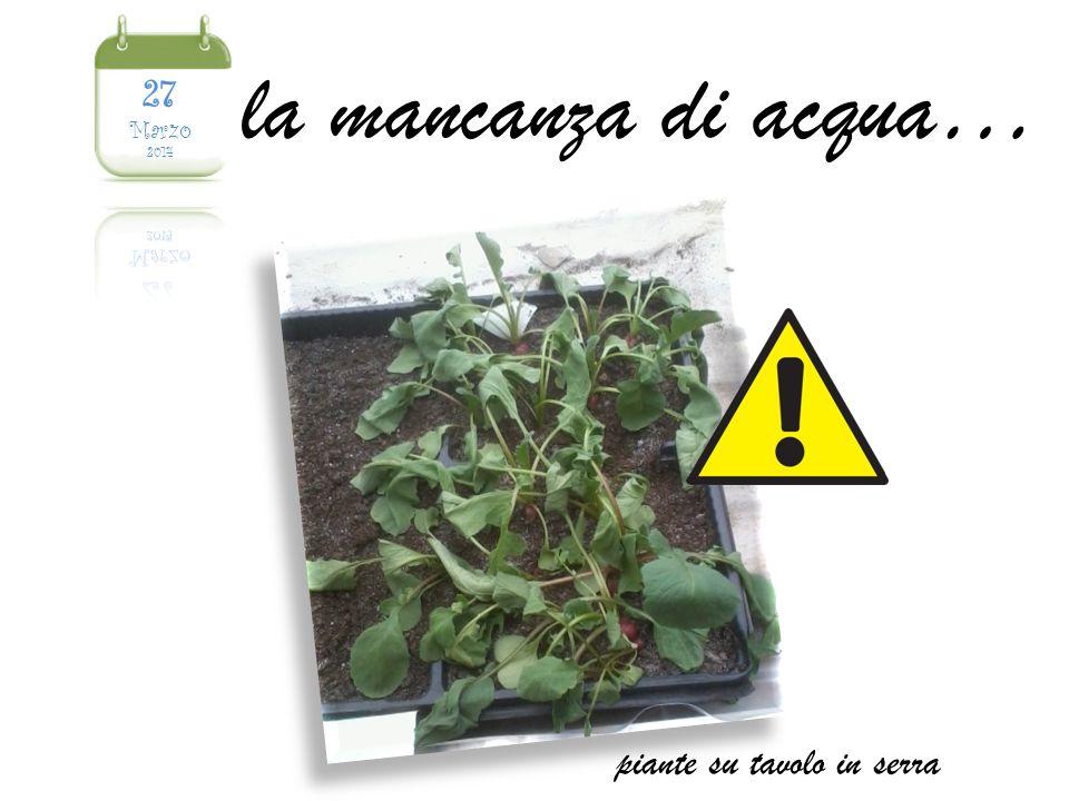 la mancanza di acqua… piante su tavolo in serra