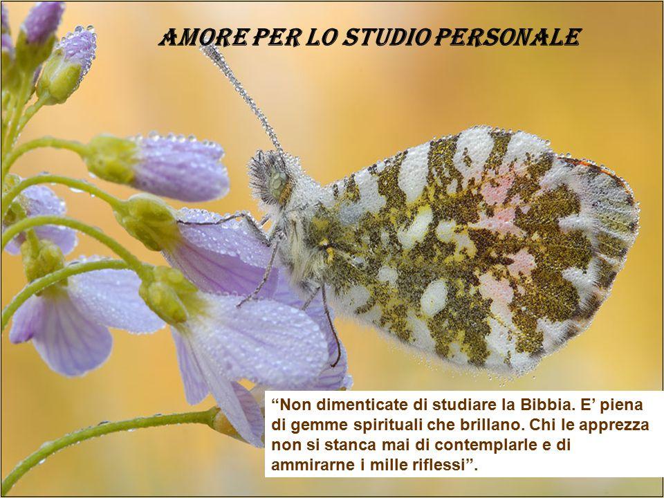AMORE PER LO STUDIO PERSONALE Non dimenticate di studiare la Bibbia.