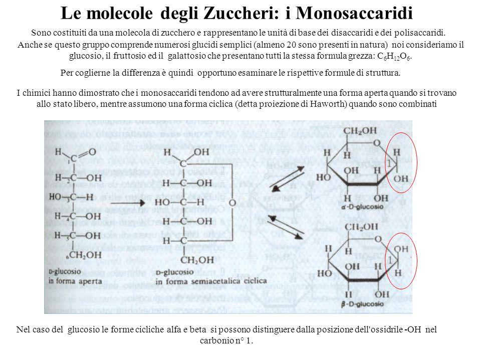 Le molecole degli Zuccheri: i Monosaccaridi Nel caso del glucosio le forme cicliche alfa e beta si possono distinguere dalla posizione dell ossidrile ‑ OH nel carbonio n° 1.