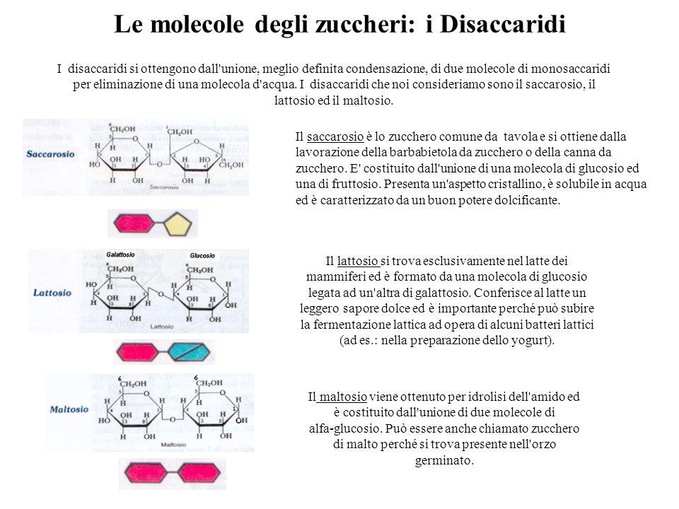 Le molecole degli zuccheri: i Disaccaridi I disaccaridi si ottengono dall unione, meglio definita condensazione, di due molecole di monosaccaridi per eliminazione di una molecola d acqua.