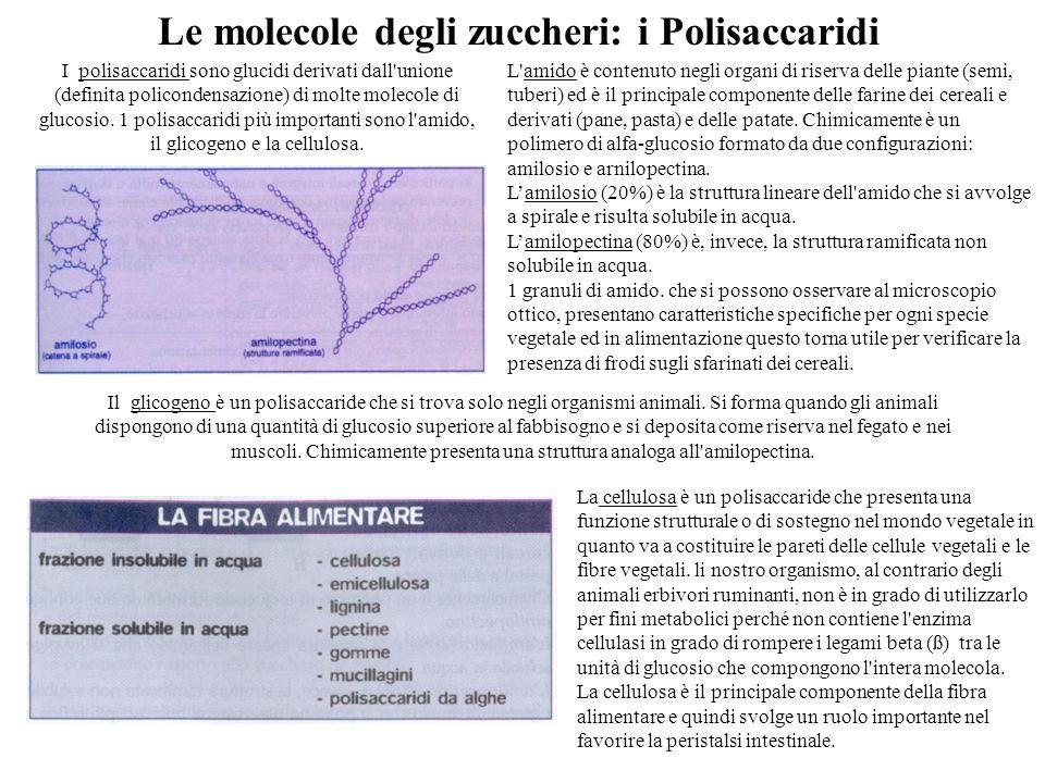 Il glicogeno è un polisaccaride che si trova solo negli organismi animali.
