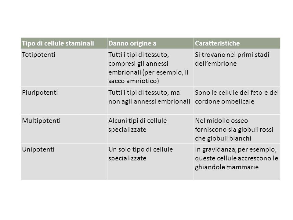 Tipo di cellule staminaliDanno origine aCaratteristiche TotipotentiTutti i tipi di tessuto, compresi gli annessi embrionali (per esempio, il sacco amn