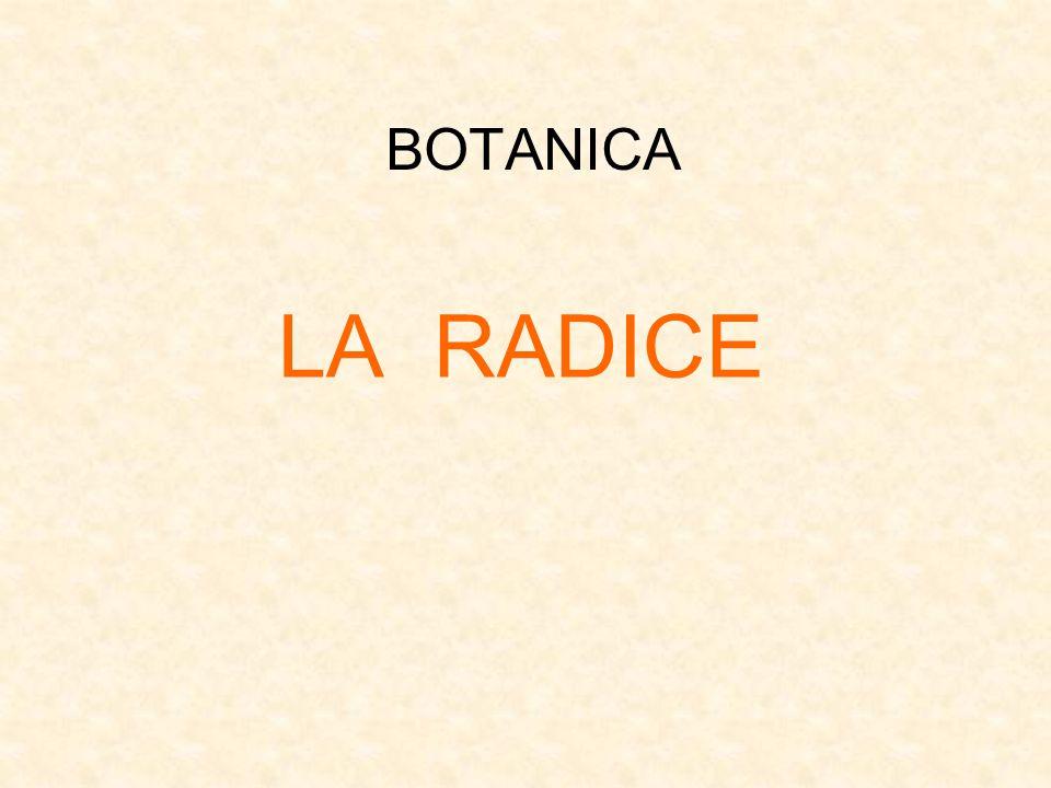 BOTANICA LA RADICE