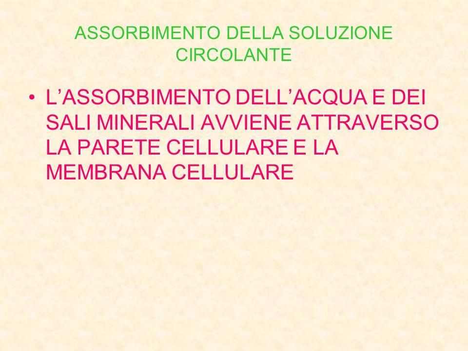 ASSORBIMENTO DELLA SOLUZIONE CIRCOLANTE L'ASSORBIMENTO DELL'ACQUA E DEI SALI MINERALI AVVIENE ATTRAVERSO LA PARETE CELLULARE E LA MEMBRANA CELLULARE