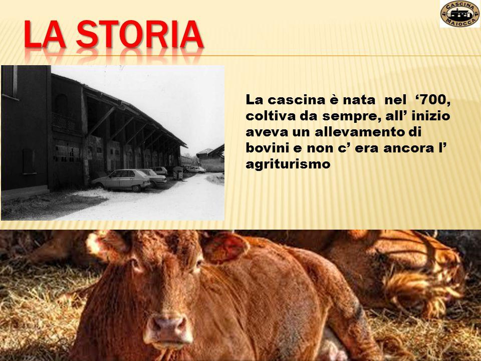 La cascina è nata nel '700, coltiva da sempre, all' inizio aveva un allevamento di bovini e non c' era ancora l' agriturismo