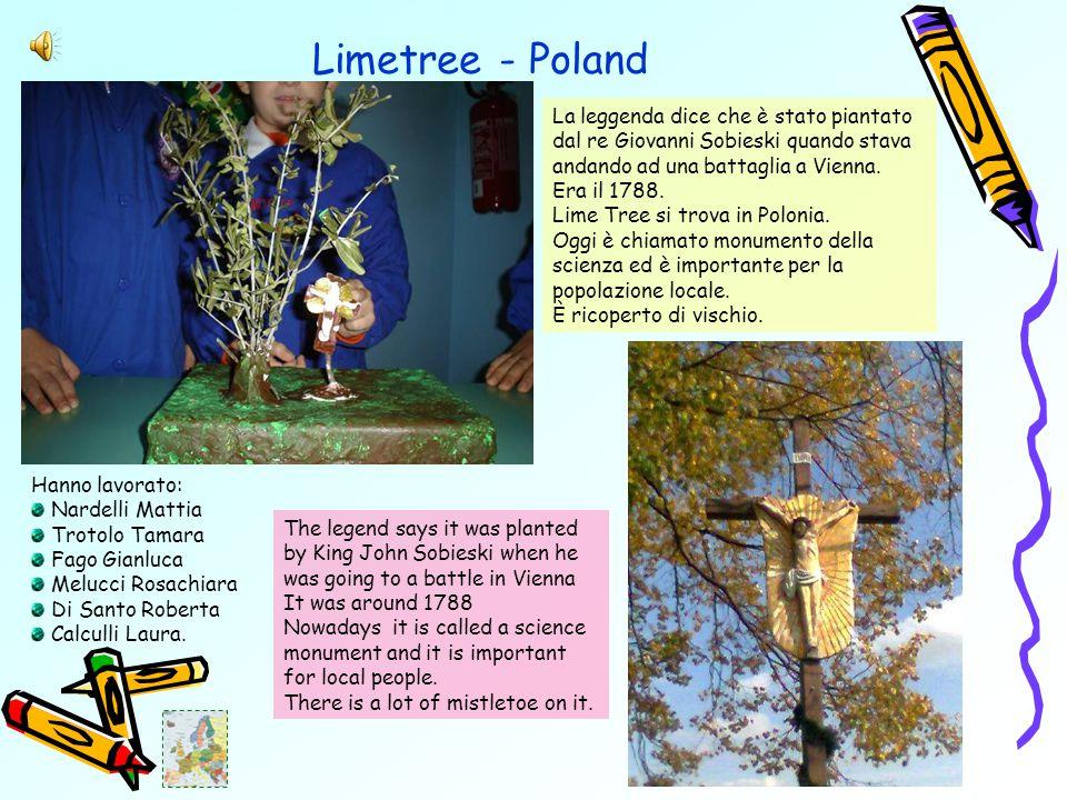 Limetree - Poland La leggenda dice che è stato piantato dal re Giovanni Sobieski quando stava andando ad una battaglia a Vienna.
