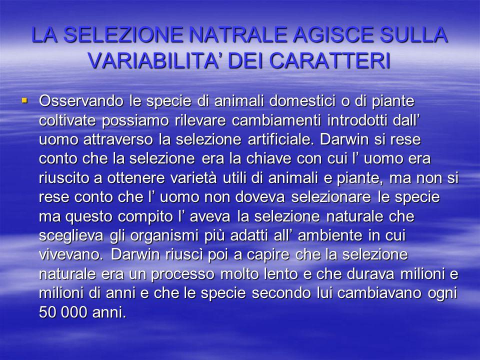 LA SELEZIONE NATRALE AGISCE SULLA VARIABILITA' DEI CARATTERI  Osservando le specie di animali domestici o di piante coltivate possiamo rilevare cambi