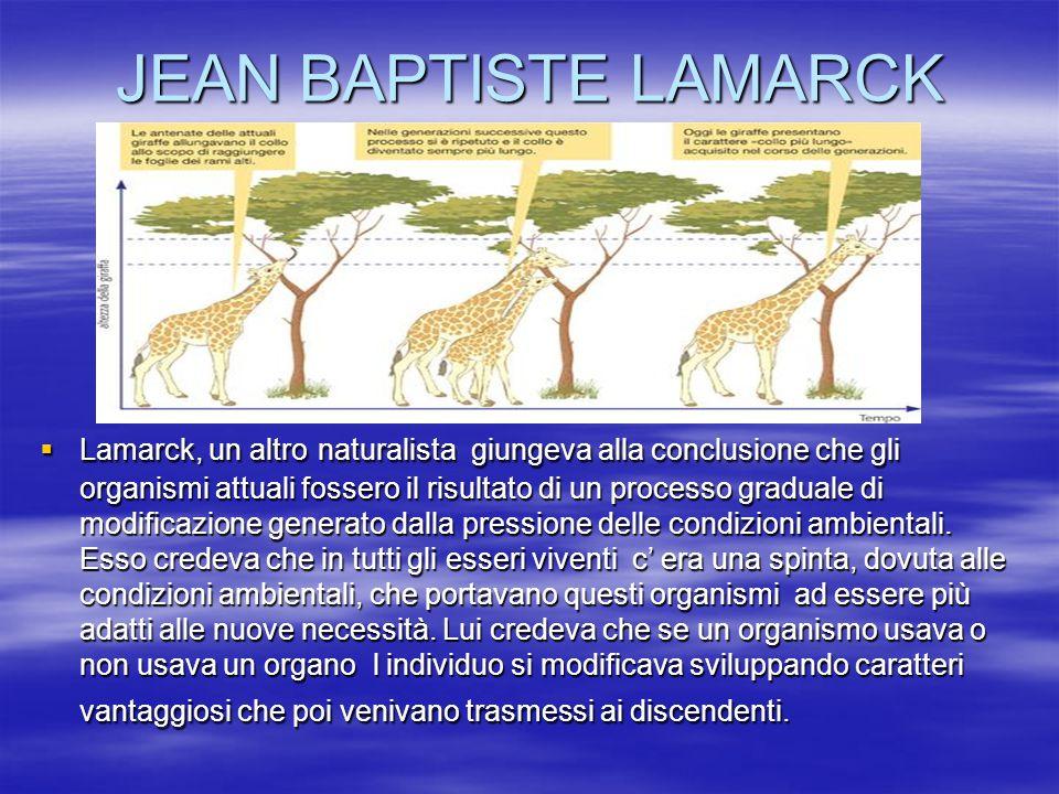 JEAN BAPTISTE LAMARCK  Lamarck, un altro naturalista giungeva alla conclusione che gli organismi attuali fossero il risultato di un processo graduale