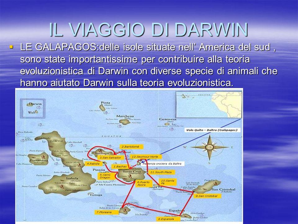 IL VIAGGIO DI DARWIN LLLLE GALAPAGOS:delle isole situate nell' America del sud, sono state importantissime per contribuire alla teoria evoluzionis