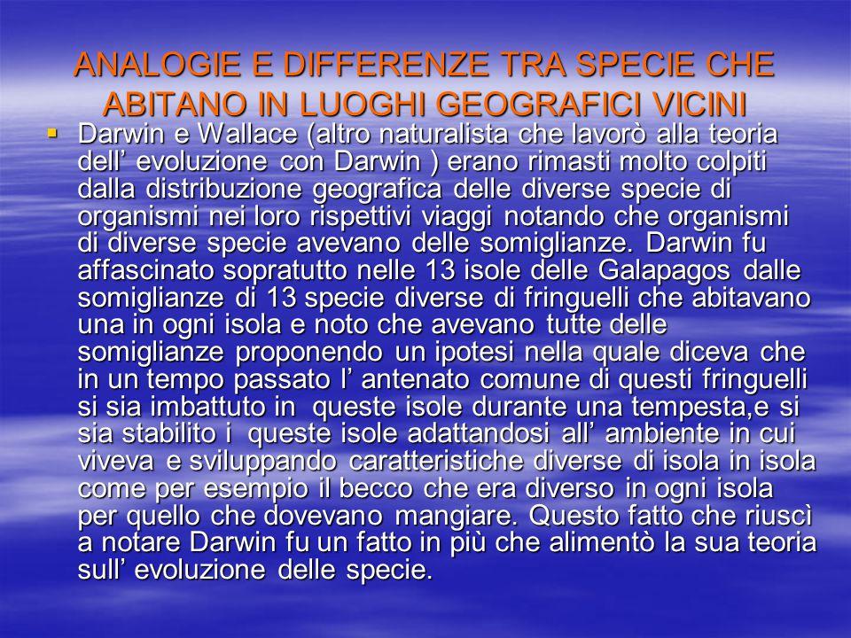 ANALOGIE E DIFFERENZE TRA SPECIE CHE ABITANO IN LUOGHI GEOGRAFICI VICINI  Darwin e Wallace (altro naturalista che lavorò alla teoria dell' evoluzione