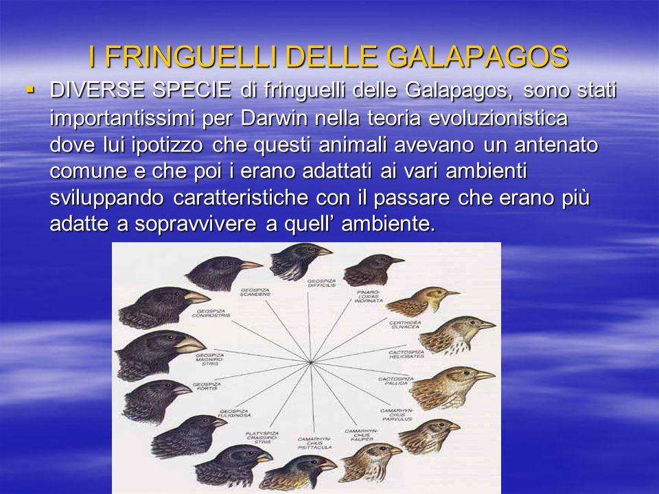 I FRINGUELLI DELLE GALAPAGOS  DIVERSE SPECIE di fringuelli delle Galapagos, sono stati importantissimi per Darwin nella teoria evoluzionistica dove l