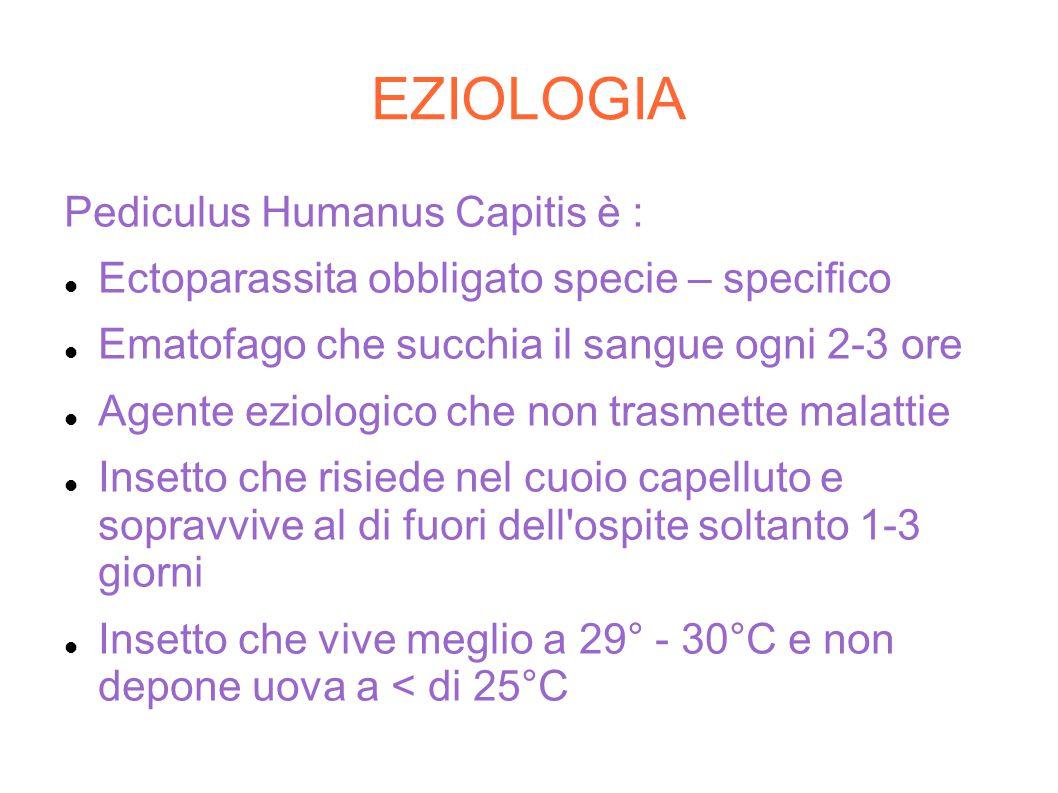 EZIOLOGIA Pediculus Humanus Capitis è : Ectoparassita obbligato specie – specifico Ematofago che succhia il sangue ogni 2-3 ore Agente eziologico che