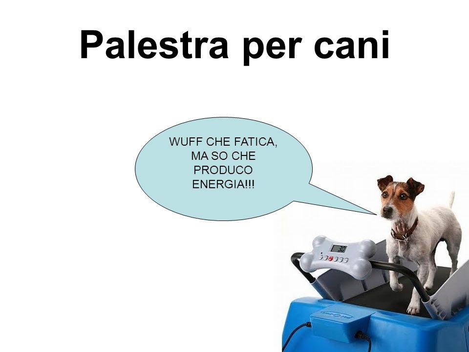 Palestra per cani WUFF CHE FATICA, MA SO CHE PRODUCO ENERGIA!!!