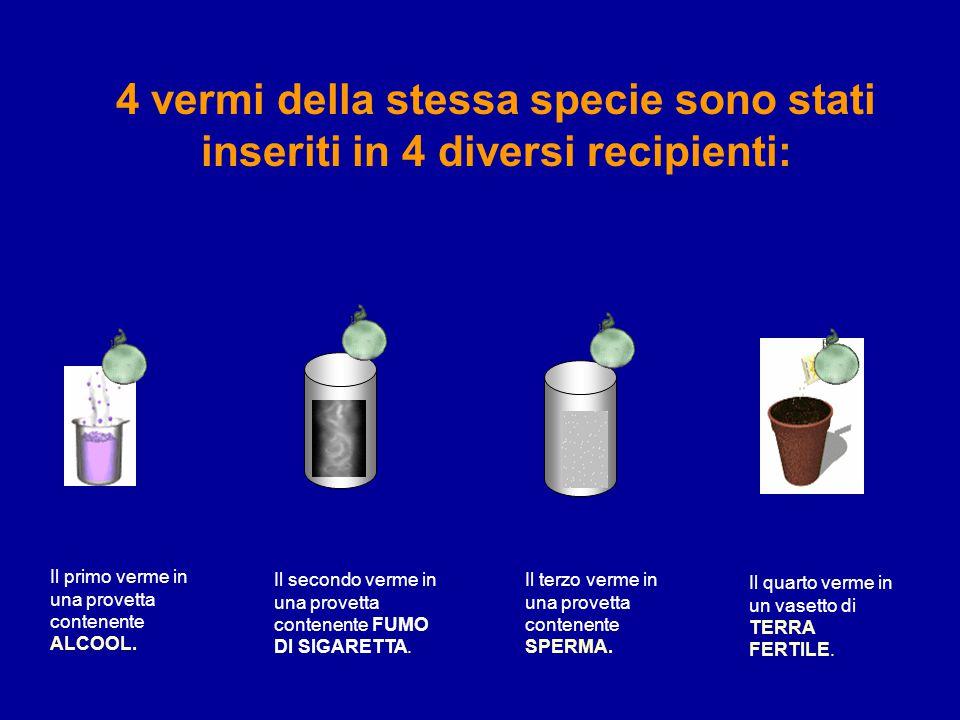 4 vermi della stessa specie sono stati inseriti in 4 diversi recipienti: Il primo verme in una provetta contenente ALCOOL.