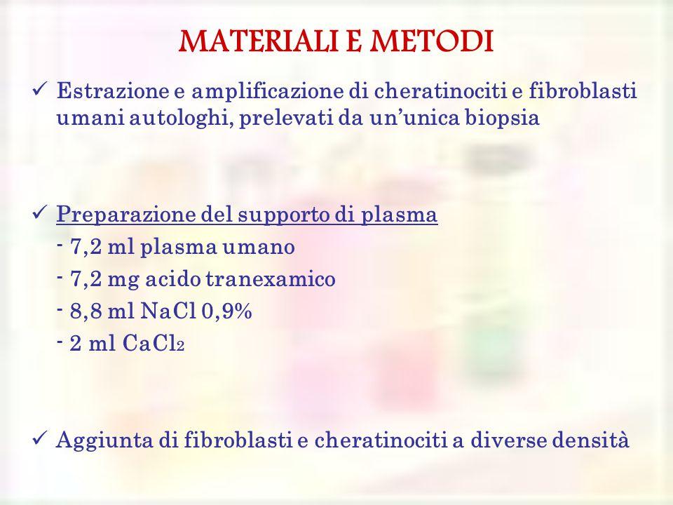MATERIALI E METODI Estrazione e amplificazione di cheratinociti e fibroblasti umani autologhi, prelevati da un'unica biopsia Preparazione del supporto di plasma - 7,2 ml plasma umano - 7,2 mg acido tranexamico - 8,8 ml NaCl 0,9% - 2 ml CaCl 2 Aggiunta di fibroblasti e cheratinociti a diverse densità