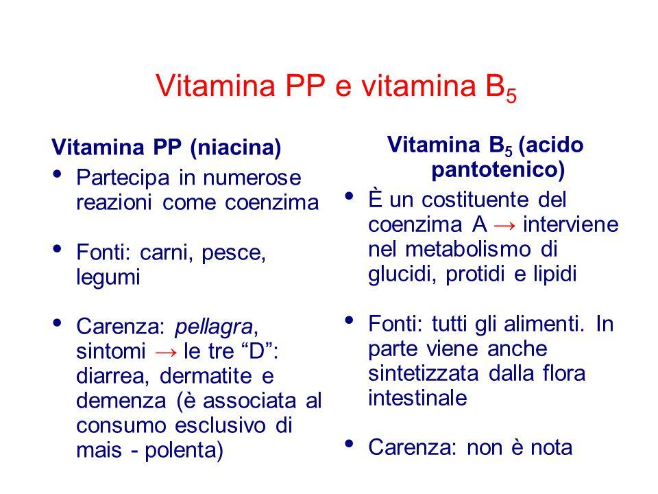 Vitamina PP e vitamina B 5 Vitamina PP (niacina) Partecipa in numerose reazioni come coenzima Fonti: carni, pesce, legumi Carenza: pellagra, sintomi → le tre D : diarrea, dermatite e demenza (è associata al consumo esclusivo di mais - polenta) Vitamina B 5 (acido pantotenico) È un costituente del coenzima A → interviene nel metabolismo di glucidi, protidi e lipidi Fonti: tutti gli alimenti.
