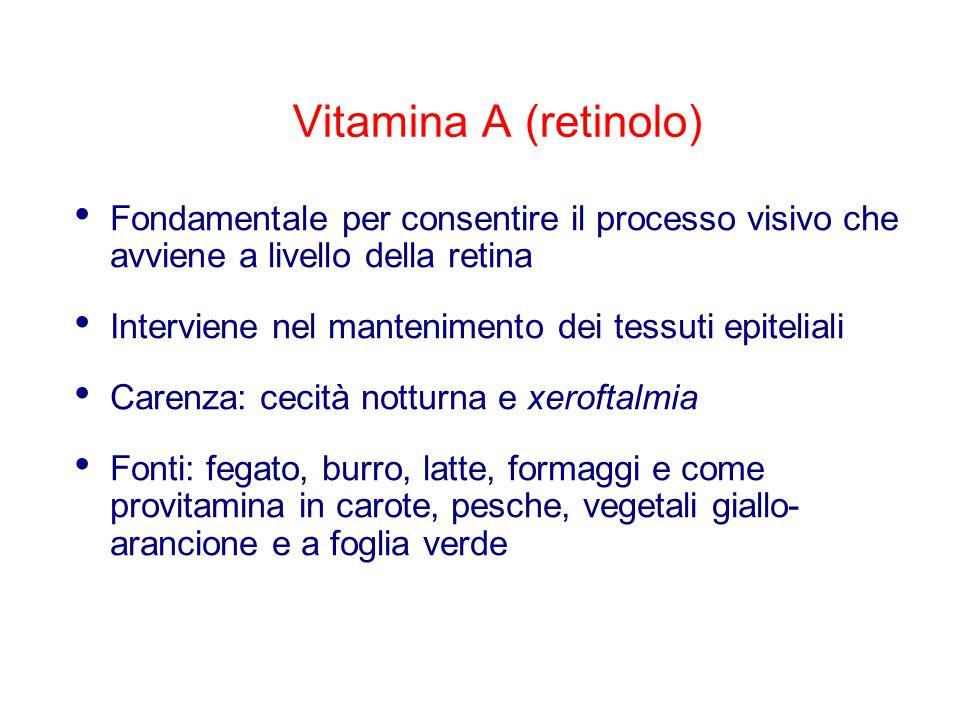 Vitamina D (calciferolo) Essenziale per il metabolismo del calcio e del fosforo e quindi per regolare il processo di ossificazione Carenza: rachitismo (nei bambini), osteomalacia (negli adulti) Fonti: latte e latticini, uova.