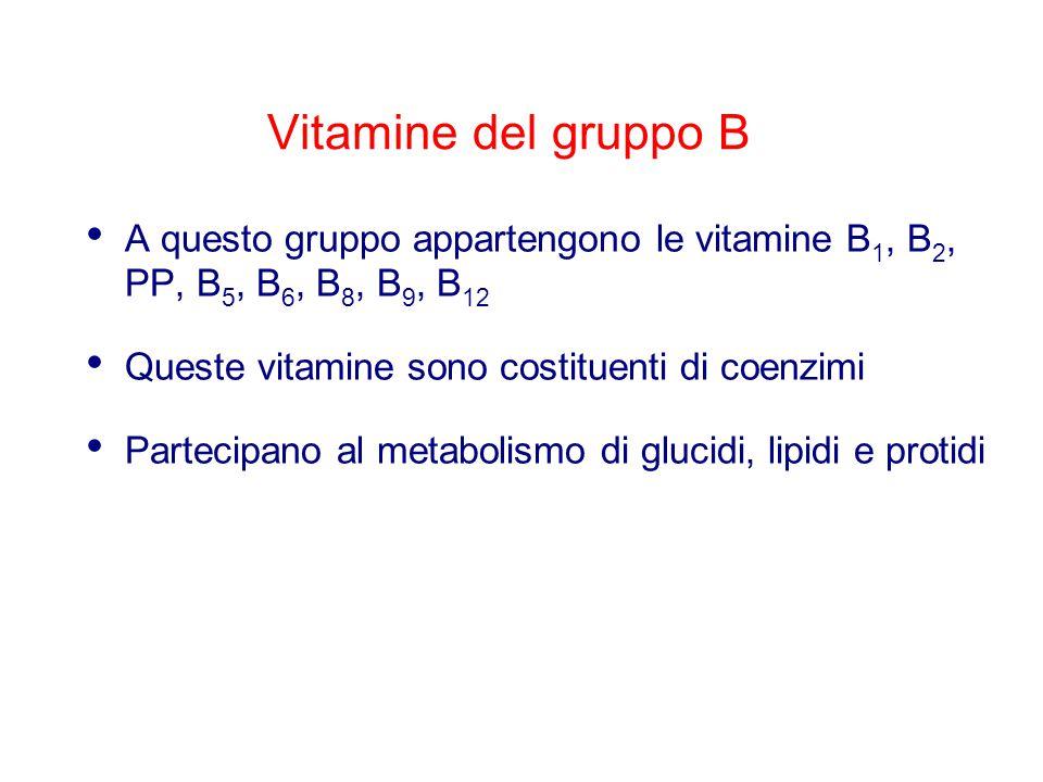 Vitamine del gruppo B A questo gruppo appartengono le vitamine B 1, B 2, PP, B 5, B 6, B 8, B 9, B 12 Queste vitamine sono costituenti di coenzimi Partecipano al metabolismo di glucidi, lipidi e protidi