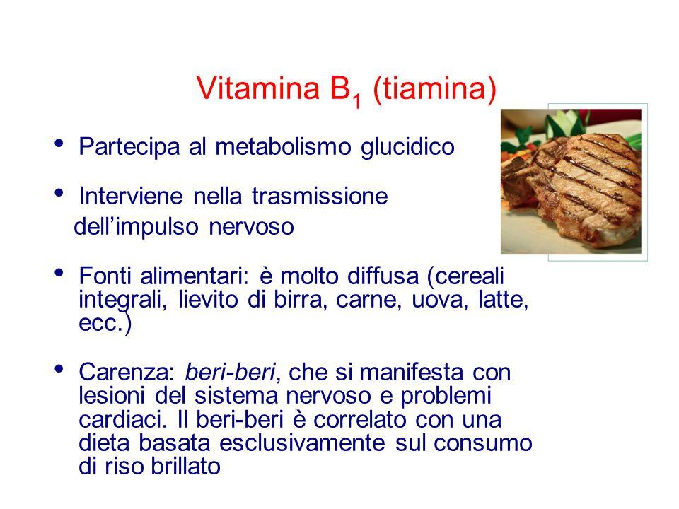 Vitamina B 1 (tiamina) Partecipa al metabolismo glucidico Interviene nella trasmissione dell'impulso nervoso Fonti alimentari: è molto diffusa (cereali integrali, lievito di birra, carne, uova, latte, ecc.) Carenza: beri-beri, che si manifesta con lesioni del sistema nervoso e problemi cardiaci.