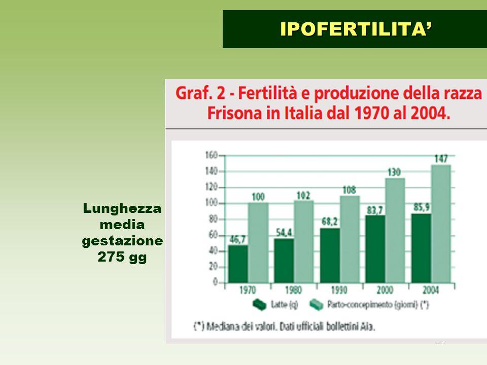 23 IPOFERTILITA' Lunghezza media gestazione 275 gg
