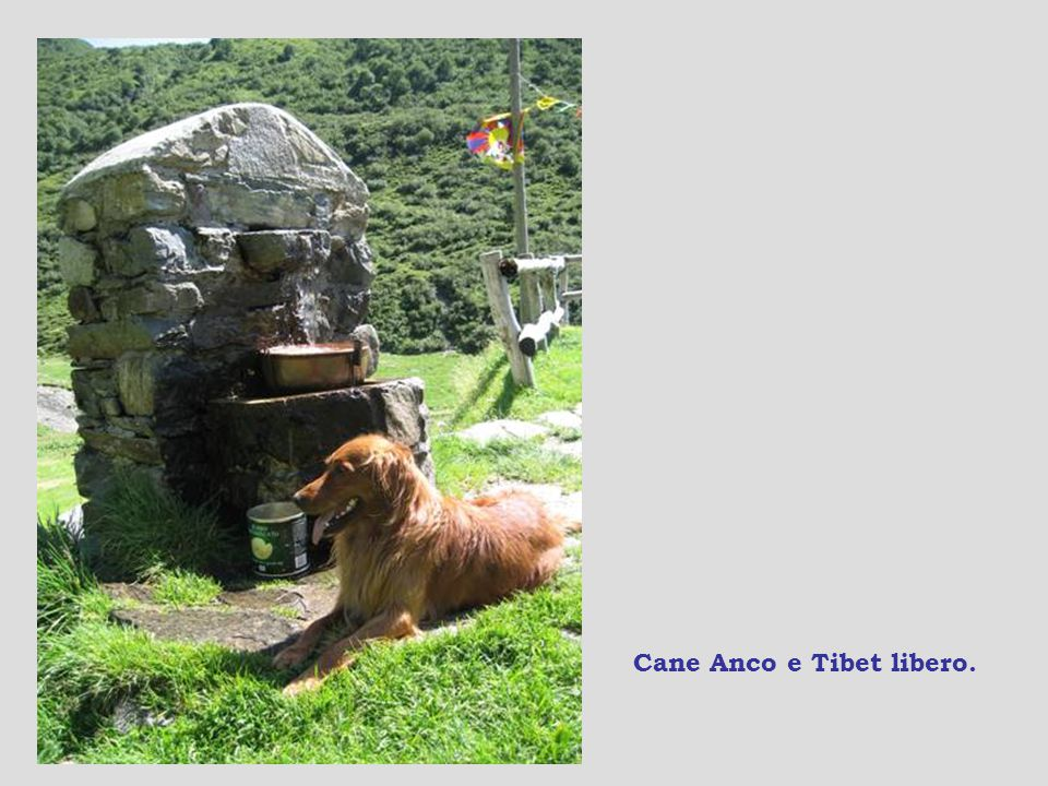 Cane Anco e Tibet libero.