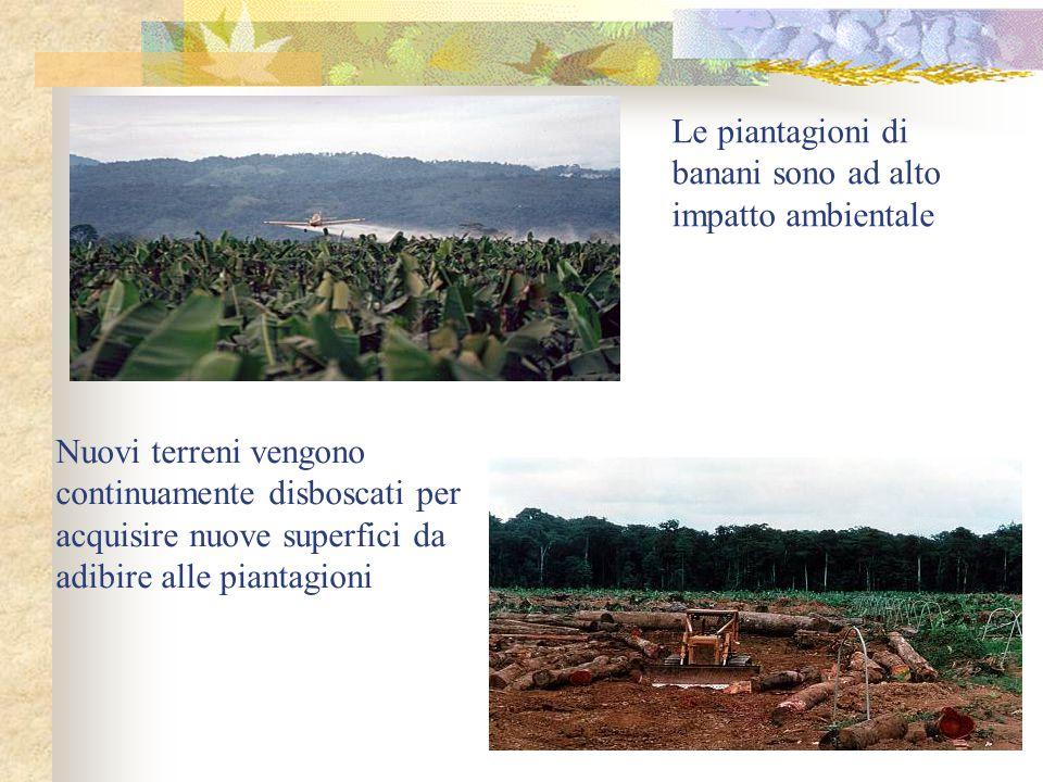 Nuovi terreni vengono continuamente disboscati per acquisire nuove superfici da adibire alle piantagioni Le piantagioni di banani sono ad alto impatto