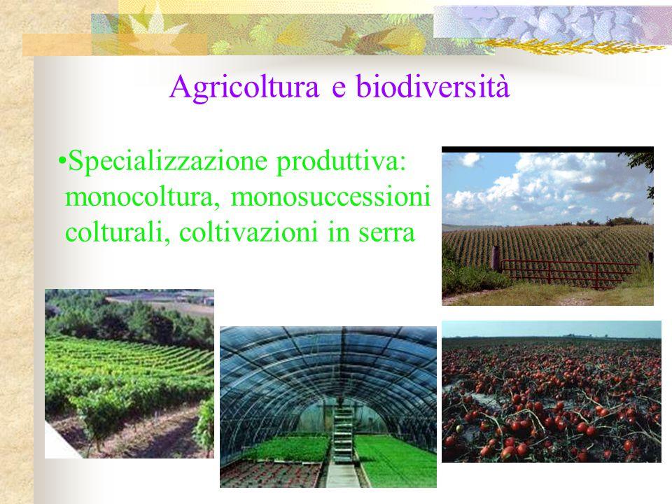 Agricoltura e biodiversità Specializzazione produttiva: monocoltura, monosuccessioni colturali, coltivazioni in serra