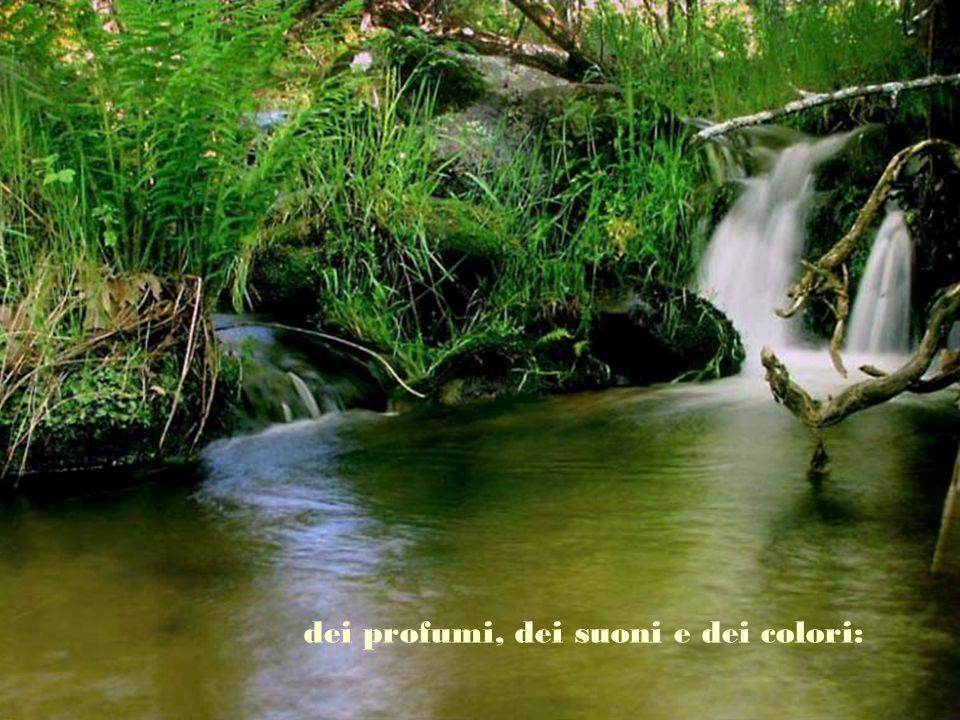 dei profumi, dei suoni e dei colori: