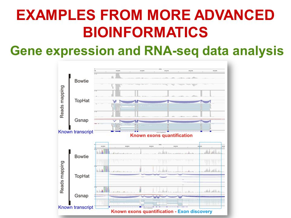 EXAMPLES FROM MORE ADVANCED BIOINFORMATICS Gene expression and RNA-seq data analysis