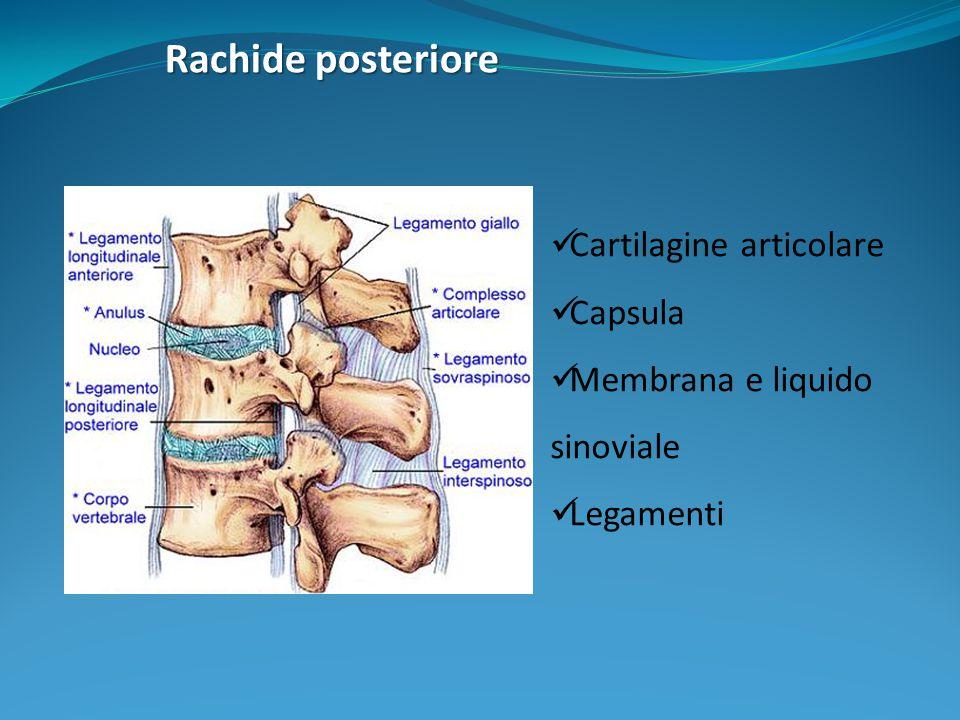Movimenti Requisiti fondamentali: Pilastro anteriore A: funzione di rigidità per efficienza statica e protezione organi.