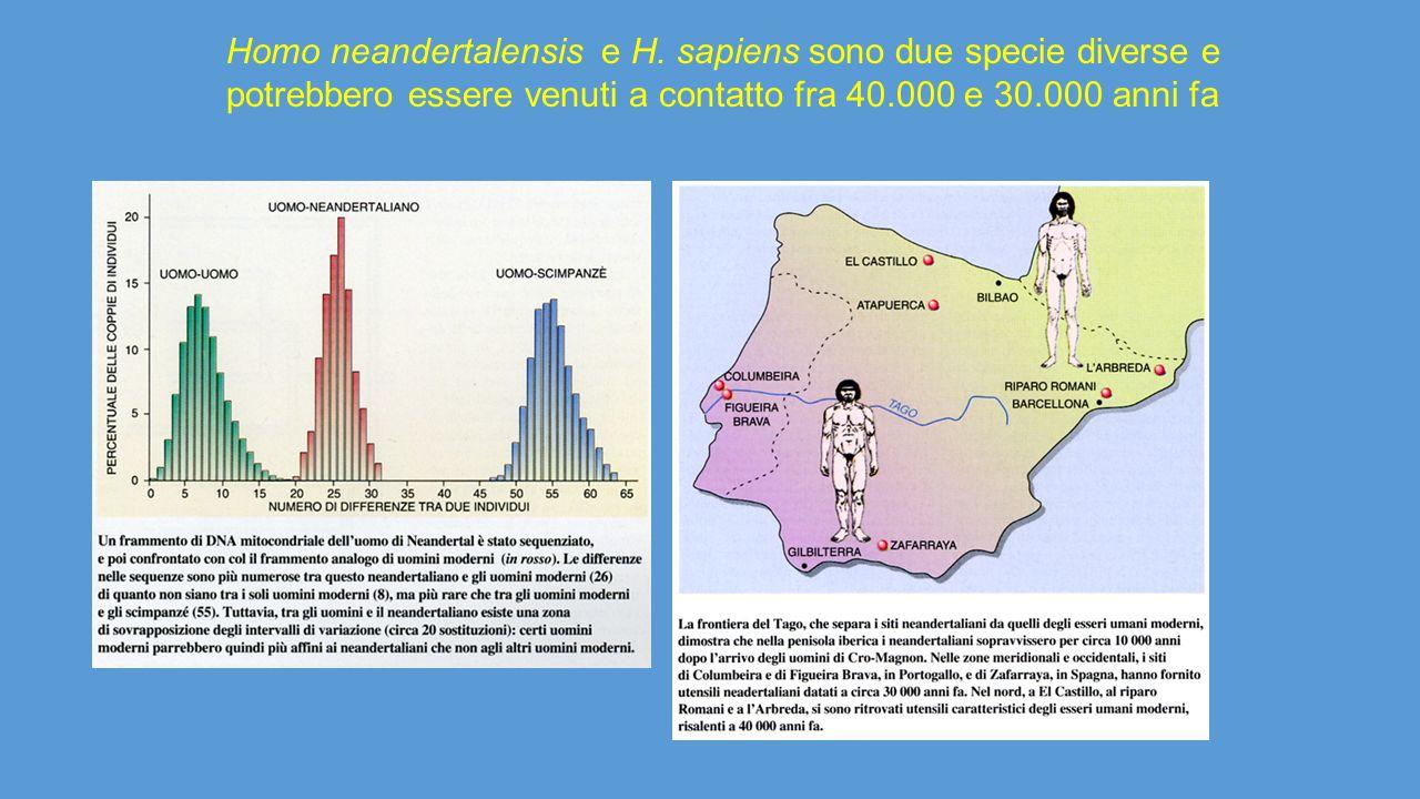 Homo neandertalensis e H. sapiens sono due specie diverse e potrebbero essere venuti a contatto fra 40.000 e 30.000 anni fa