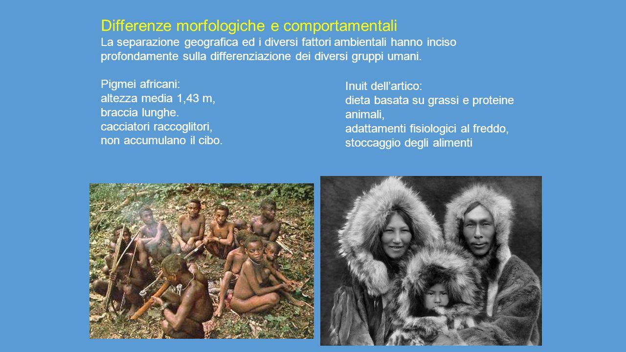 Differenze morfologiche e comportamentali La separazione geografica ed i diversi fattori ambientali hanno inciso profondamente sulla differenziazione