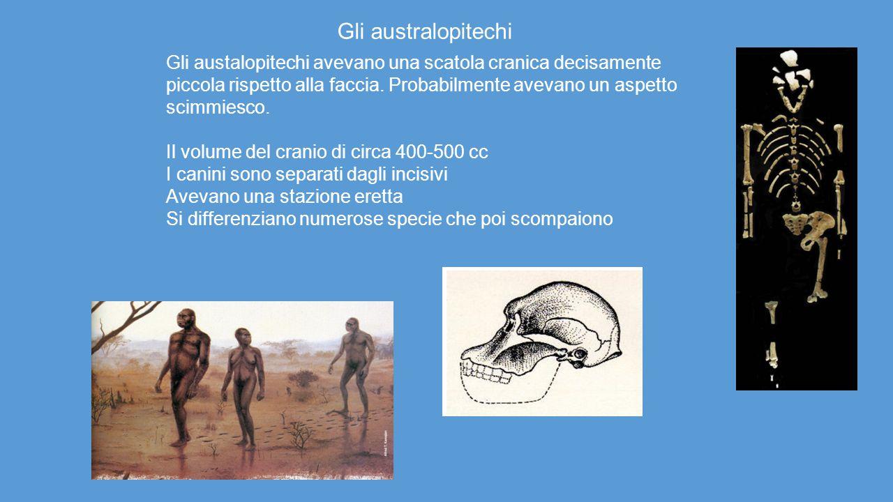 Gli austalopitechi avevano una scatola cranica decisamente piccola rispetto alla faccia. Probabilmente avevano un aspetto scimmiesco. Il volume del cr