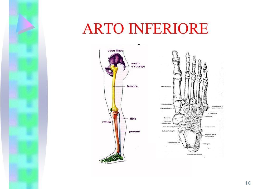 ARTO INFERIORE 10