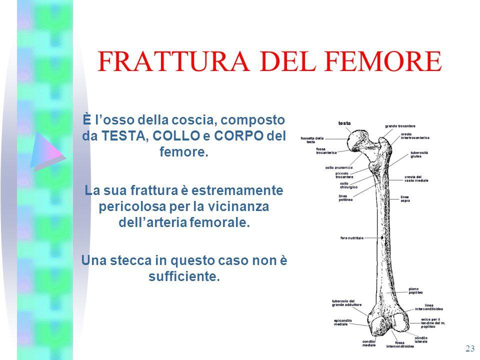 FRATTURA DEL FEMORE 23 È l'osso della coscia, composto da TESTA, COLLO e CORPO del femore. La sua frattura è estremamente pericolosa per la vicinanza