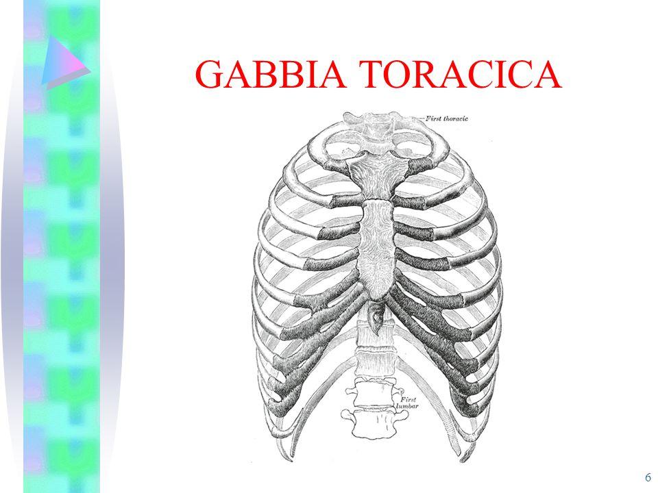 GABBIA TORACICA 6