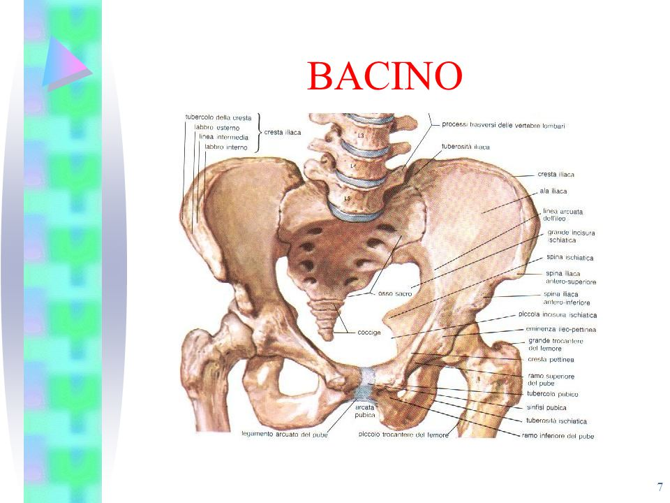 BACINO 7